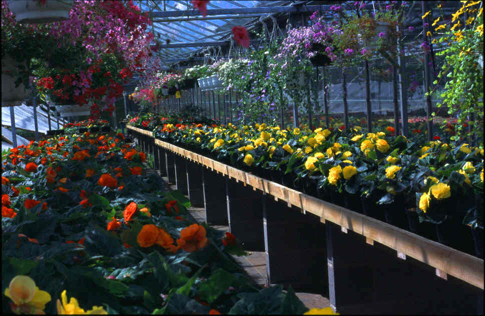 Some Of Our Bedding Plants